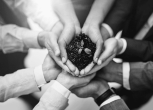 hands holding a piece of soil with a small growing plant black and white