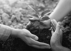3 hands around a small tree black and white
